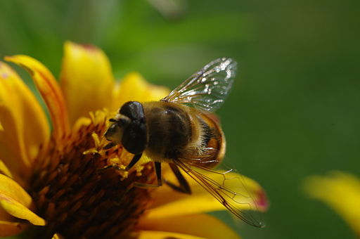Bees Are Buzzing Around This Vegan's Head