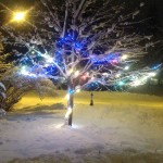 Snow & Lights On Our Tree