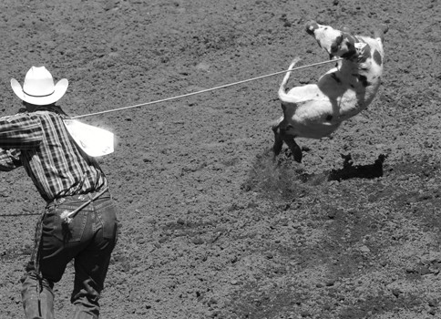 The Calgary Stampede: Abject Cruelty and Death