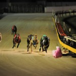 Forcing Greyhounds to Race