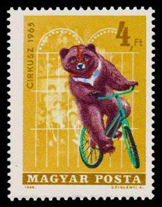 circus bear, circa 1965