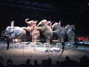 Performing Elephants