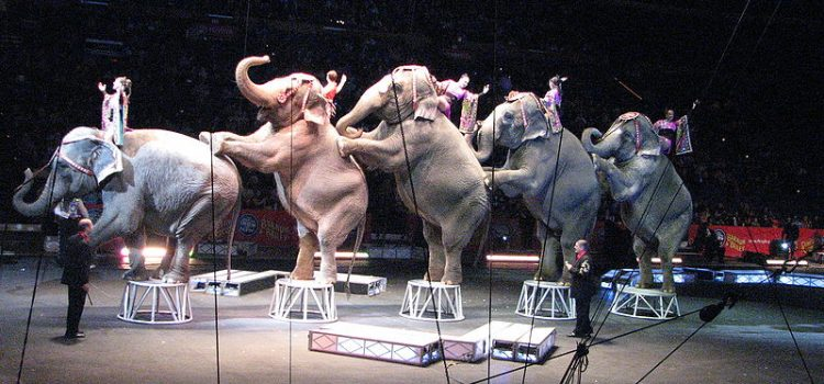 The Lights Go Out in the Ringling Big Top: A Vegan View