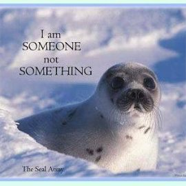 The Canadian Commercial Seal Hunt: A  Newfoundlander's Vegan View