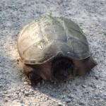 Terrified Turtle