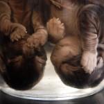 Kittens in Formaldehyde: Vet School, Canada