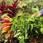 Beauty-full Veganic Farming