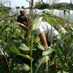 Hand On Veganic Farming Practices