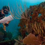Coral Reef dying due to climate change and over-fishing